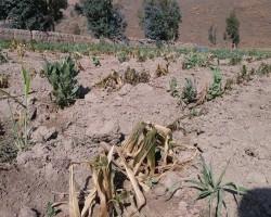 Ministerio de Agricultura declara en emergencia hídrica a la región Huancavelica.!!